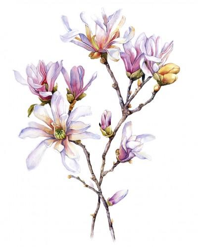 Dr. Holly Giannatselis magnolia